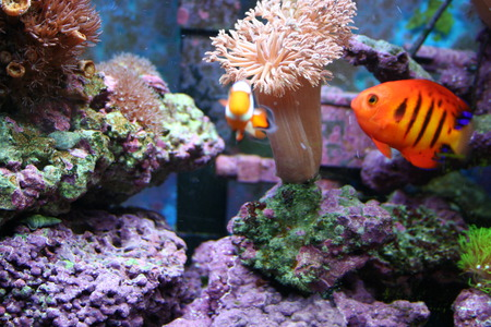 Saltwater Fish - aquarium, water, salt, fish, exotic, saltwater