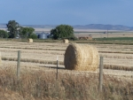 Hay Bales in open field, Ririe, Idaho