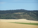 Grain Field with Irrigation, Ririe, Idaho