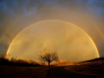 Perfect Rainbow Arc Over A Lone Tree