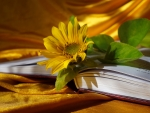Sunflower book