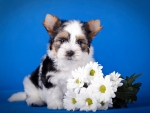 Puppy among flowers