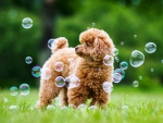 Puppy among soap bubbles