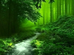 Through the green forest