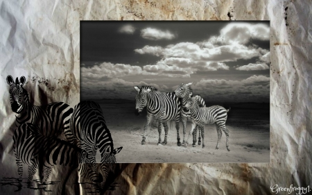 ZEBRA'S IN BLACK AND WHITE - ABSTRACT, ZEBRA, ANIMALS, IMAGE