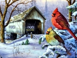 Cardinals in the Snow F