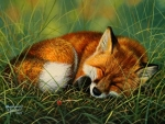 Sleep Well, Little Fox