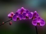 The Most Wonderful Orchid