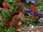 Snacking Squirrel in the Flowers