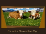 Cows - It's a Moooovelous Day