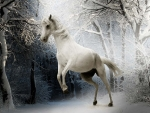 Snowy White Horse Playing in the Snow