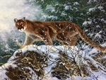 ..Mountain Lion..