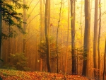 Fall Forest Light