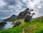 beautiful coastal scenery in new zealand