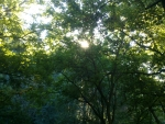 Sunshine through a tree canopy