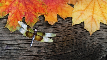 Fallen on Wood - wood, leaves, board, autumn, dragonfly, fall