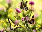 Butterflies and Thistle F