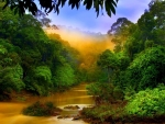 Rain forest river