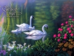 Swan Family - Verse