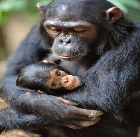 Mother's touch - animals, love, baby, Mother