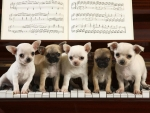 sing us a song dogs