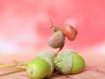 Acorns and a snail