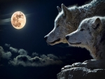 Howling time