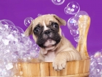 Bubbly puppy