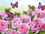Peonies and Butterflies