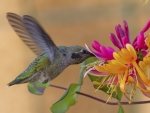 SPRING FLOWER and HUMMING BIRD