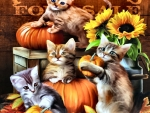 Autumn Kitties F