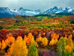 Colorado at Fall
