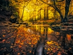 Autumn Forest Sunlit Stream