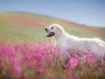 dog in field