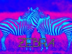 colorful  zebras