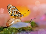 Butterfly and snail
