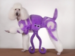 Octopuss poodle