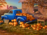 Pumpkins for Sales