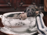 Puppy In A Bowl