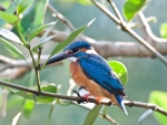 Colorful Kingfisher