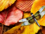 Fall Leaves and Dragonfly