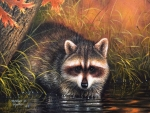 Raccoon at Fall