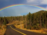 Rainbow over Roadside Forest Trees