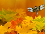 Dragonfly and Autumn Leaves