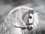 Stallion in white