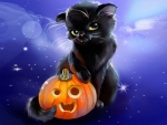 Sweet Black Cat