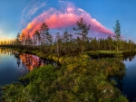 Pink Clouds Above The Forest