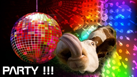 Let's party! - funny, tongue, cow, party, animal