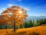 Autumn mountain tree