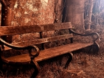 Old Bench in Autumn Forest